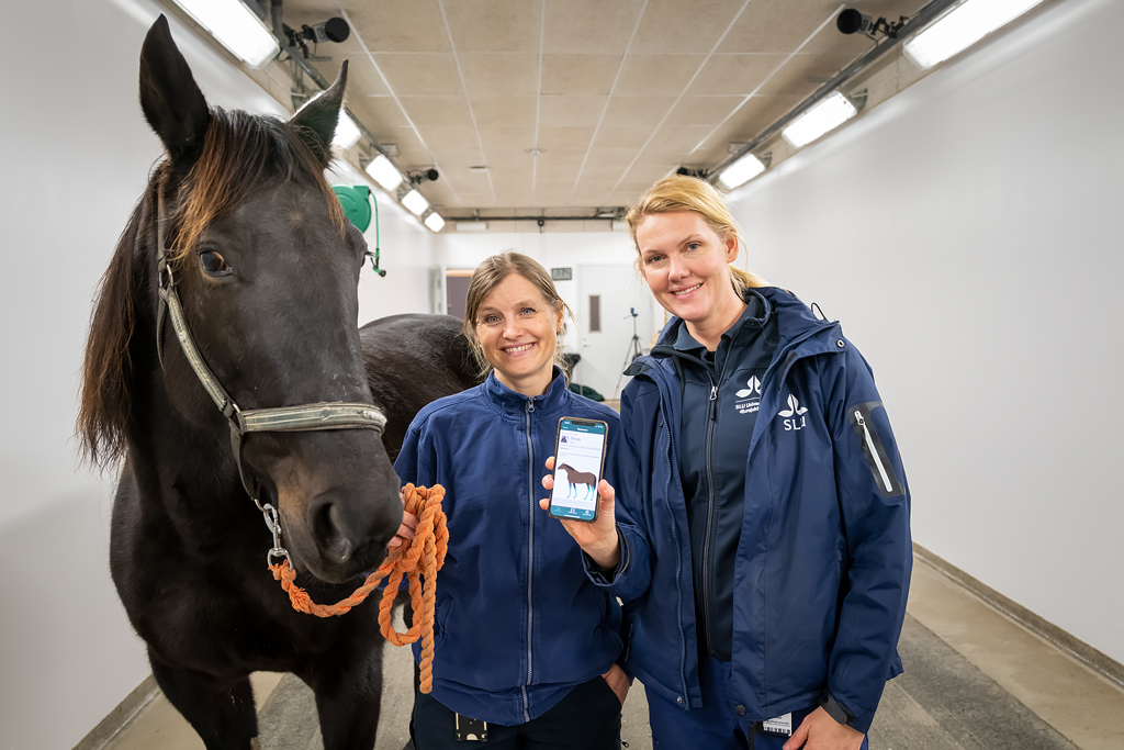 With the new digital measuring tool, horse owners can film their horses themselves in order to be able to early detect and measure lameness.