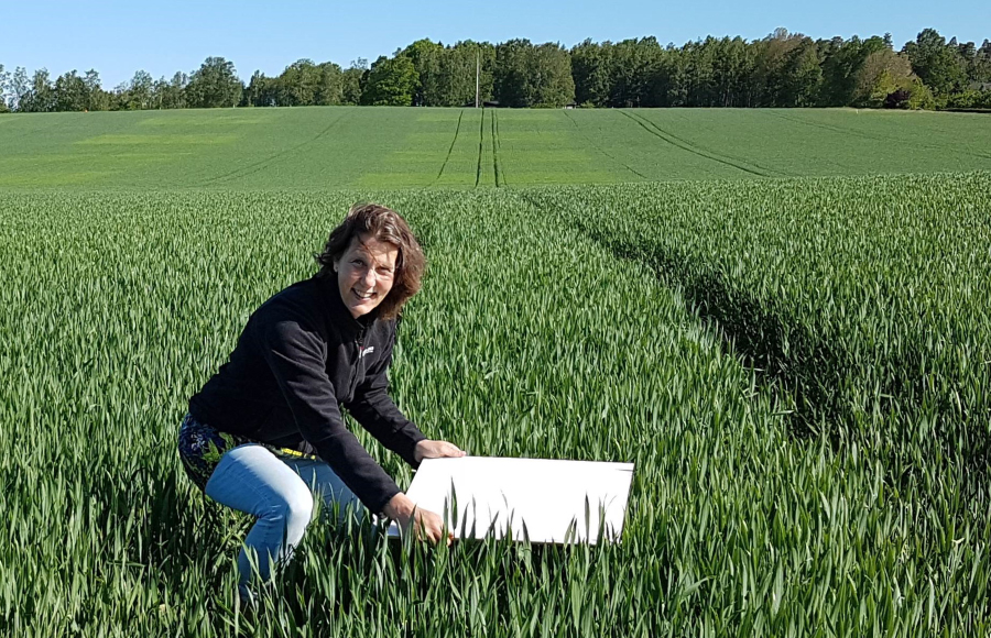 Precision agriculture - a down to earth perspective for sustainable agriculture